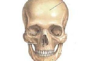 funcion de los huesos de la cara
