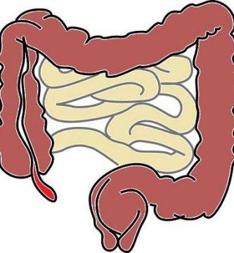 funcion de los intestinos