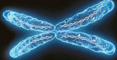 funcion de la cromatina