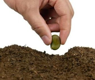 funcion de las semillas