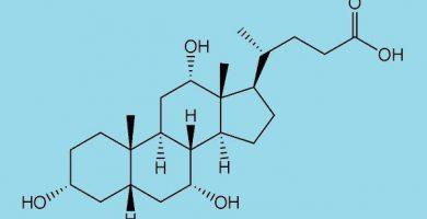 funcion de los acidos biliares
