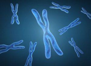 funcion de los cromosomas