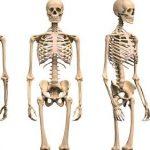funcion de los huesos del cuerpo humano