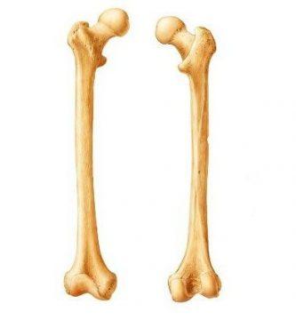 funcion de los huesos largos