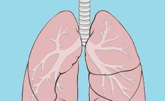 funcion de los pulmones