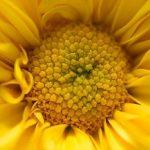 funcion del polen
