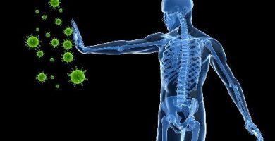 funcion del sistema inmunologico