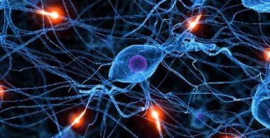 funcion del tejido nervioso