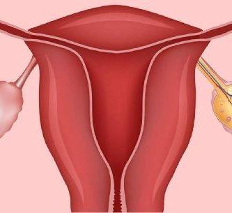 funcion del utero