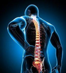 funcion de la columna vertebral