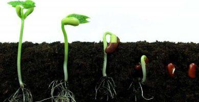 funcion de la germinacion