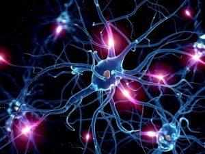 funcion de las celulas nerviosas