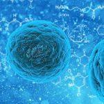 funcion de los ribosomas