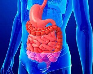 funcion del sistema digestivo