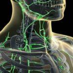 funcion del sistema linfatico