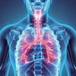 funcion del sistema respiratorio