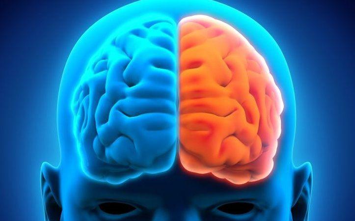 funcion de los hemisferios cerebrales