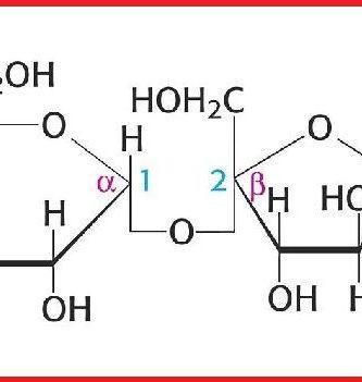 funcion de los oligosacaridos