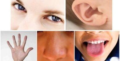 funcion de los receptores sensoriales